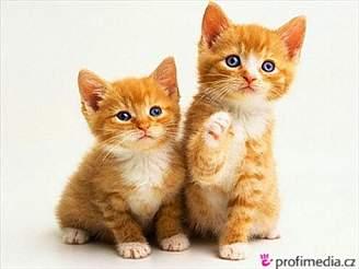 Koťata, kočky, kočka, kotě
