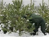 Les, vánoční stromek
