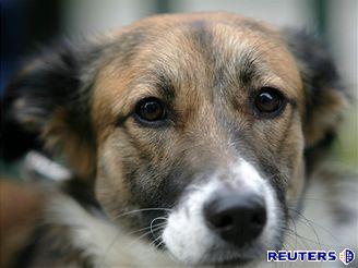 Demonstrace ochránců zvířat v Bukurešti proti zabíjení volně žijících psů