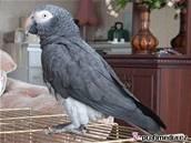 Papoušek se naučil německy teprv nedávno. Ilustrační foto.