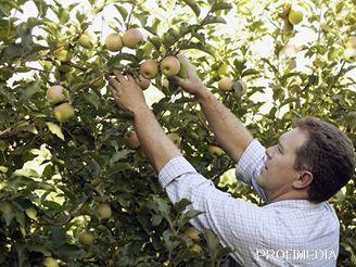 Brigáda sběr ovoce rakousko