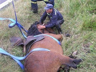 Hasiči vyprošťovali koně z příkopu