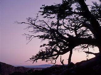 Patagonie: strom bičovaný větrem