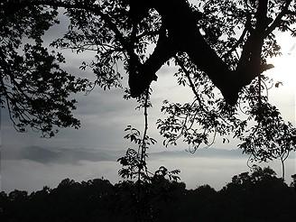 V pralese v Laosu