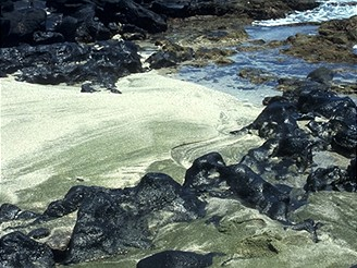 Havaj, zelená pláž