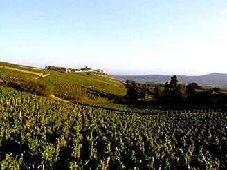 Vinice v kraji Beaujolais