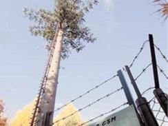 Borovice – stožár GSM, tak zní oficiální název stromu.