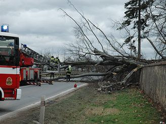 Vítr v Praze porazil strom