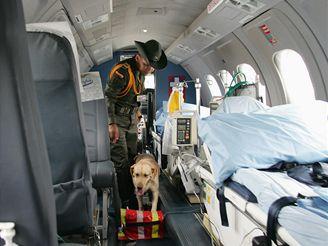 Labradorka Agata je vycvičená na hledání drog