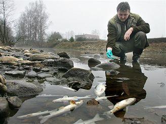 uhynulé ryby v Padrďském potoce