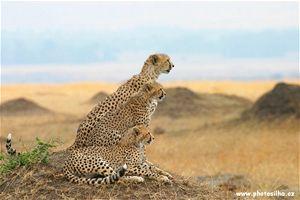 Gepardí rodinka