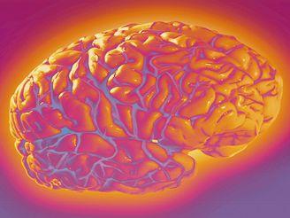 Mozek je odjakživa předmětem zkoumání a zájmu vědců.