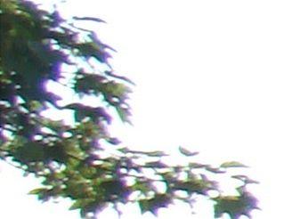 barevná vada 9,1 mm