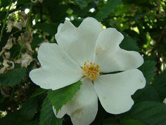 Makro květ