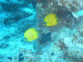 Egypt - podmořský svět