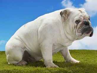 Život se psem je plný radosti, ale i odpovědnosti.