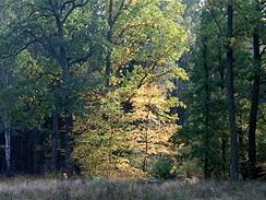 Klánovický les, říjen 2007