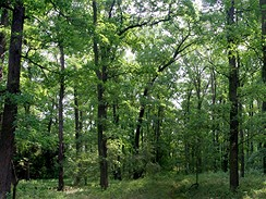 Klánovický les, okolí 8.jamky, léto 2007