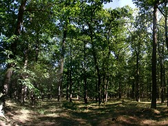 Klánovický les, okolí 3.jamky, léto 2007