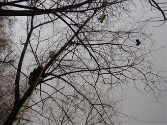 záchrana havrana na Karvinsku (5.11.2007