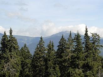 Krkonoše, Černá hora