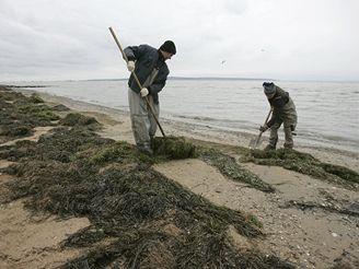 Dělníci uklízejí následky ekologické havárie v Kerčském průlivu