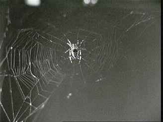 Pavouk Arabella usnoval během experimentu na Skylabu tuto síť