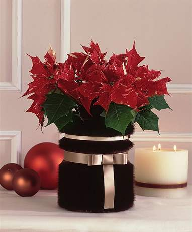Vánoční hvězda v kožichu - dekorace krok za krokem