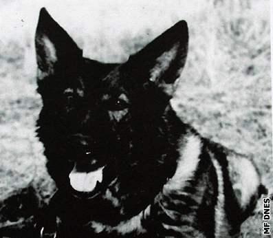 Legendární pes Brek