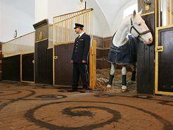 Vlastimil Kadlec provádí výkrop stájí v Národním hřebčíně v Kladrubech nad Labem (7.1. 2008)