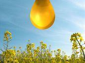 Řepka, biopaliva