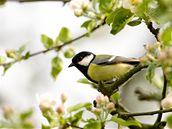 jaro, pták, strom, květ