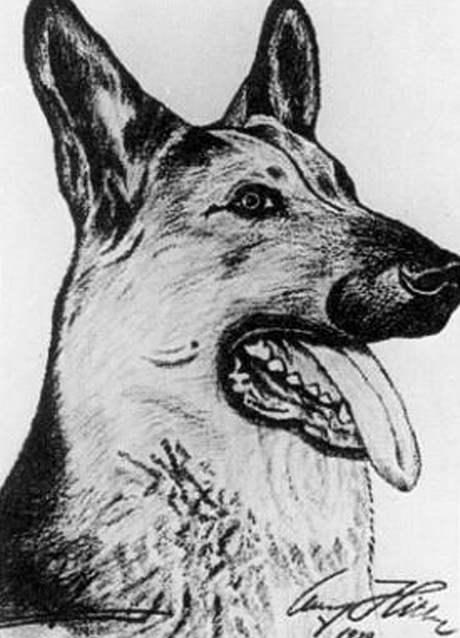 Kresba psa. Autorem je Hitler