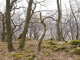 Výlet krajinou lišky Bystroušky
