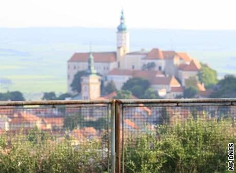 Z vinohradu, na kterém pro Adama otročily seniorky, je výhled na mikulovský zámek