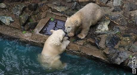 Křtiny šestiměsíčních medvíďat v brněnské zoo