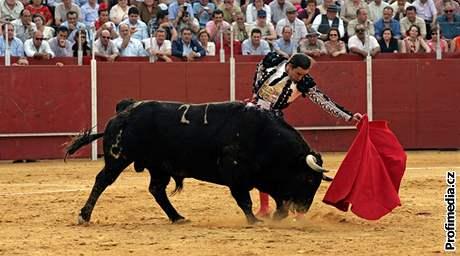 Zvíře neodejde z arény živé nikdy, s polámaným tělem občas skončí i matador. Ilustrační foto.