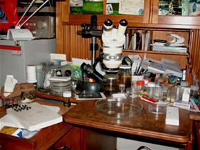 Farma na mrtvoly - Mark Benecke jeden z nejznámějších entomologů