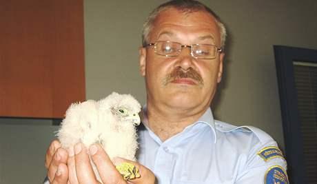 Brněnští strážníci se starali o poraněné a hladové mládě poštolky