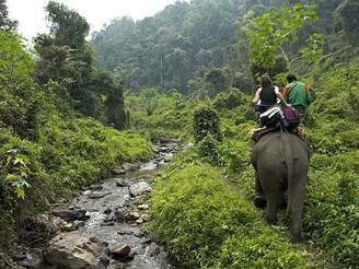 V Thajsku můžete vyrazit na trek do džungle třeba na slonech