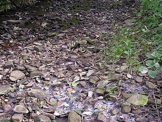 Přírodní vývěr sirné vody u potoka Trubiska ve Vizovických vrších