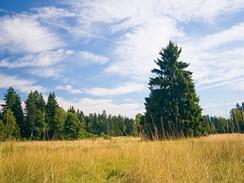 Slavkovský les – rašeliniště Tajga u Kladské
