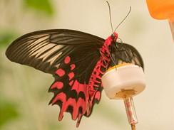 Motýlí dům v Žírovici