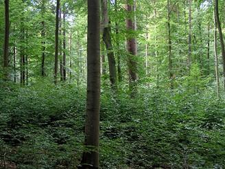 Les v Bavorsku německého barona von Rotenhana