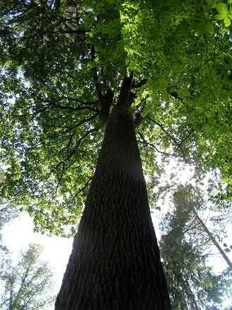 Les německého barona von Rotenhana v Bavorsku
