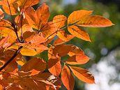 Podzim dovede být krásně barevný