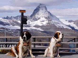 Švýcarsko, Zermatt, bernardini - záchranáři