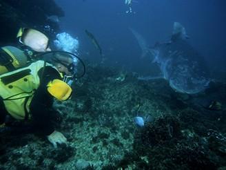Durban, Jižní Afrika, potápění se žraloky