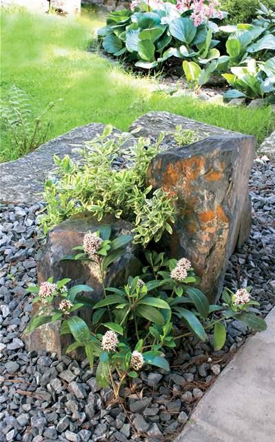 Japonská zahrada s českými rostlinami