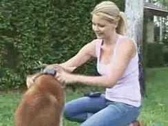 Prevence: než se vypustí pes navolno, může být opatřen obojkem